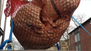Uutisvideot: Video: Kahden aikuisen miehen painoinen sinivalaan sydän näytteillä torontolaismuseossa