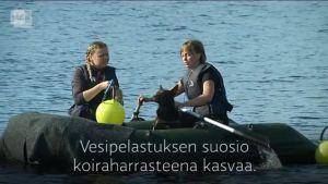 Yle Uutiset Itä-Suomi: Vesipelastuskoirat opissa.