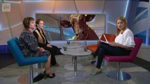 Ylen aamu-tv: Eläinsuojelulaki uudistuu