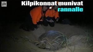 Uutisvideot: Ison valliriutan kilpikonnat vaikeuksissa