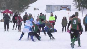 Uutisvideot: Lumi-rugby ei ole ryppyotsaisten laji