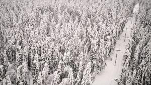Ilmakuva lumisesta metsästä ja sähkölinjasta Kainuussa.