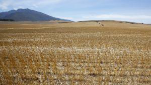 Kuiva pelto Overbergissä, Etelä-Afrikassa.