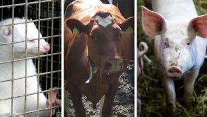 Eläimiä yhdistelmäkuva