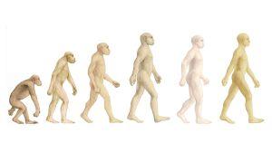 Kuvassa vasemmalta lukien simpanssi, Australopithecus afarensis, Homo habilis, Homo erectus, Homo neanderthalis ja nykyihminen.