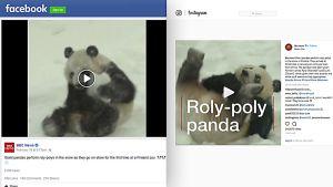 Pandavideoiden jako somessa