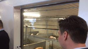 Pentti Honkolan sikalan yhteydessä on tila, jossa voidaan esitellä sikalan arkea ja tuotantoa.