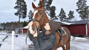 Ratsastaja katselee hevosta.