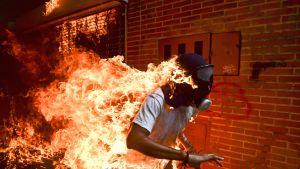 Voittokuva on otettu Venezuelassa Caracasissa protestien aikaan. Kuvassa tuleen syttynyt protestoija 28-vuotias Jose Victor Salazar Balza juoksee katuja pitkin kaasunaamari päässään.