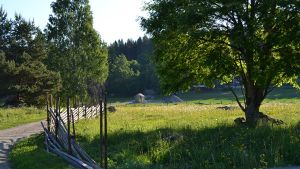 Ilorannan vanhaa raittia läpi rautakautisen kalmiston