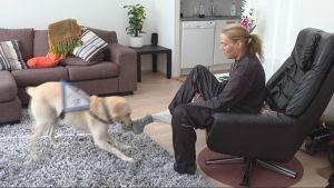 koira riisuu sukkaa
