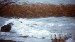 Myrskyn luomat aallot iskeytyvät meren rantaan.