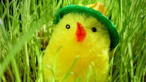 Keltainen tipu kurkistaa vihreän rairuohon seasta.