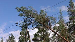 Puu kaatunut sähkölinjoille.