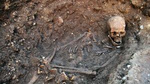 Vuonna 2012 löydetyt Richard III:n jäänteet.
