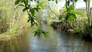 Tourujoki virtaa vihreän luonnon keskellä