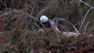 myrskyn kaatama sähköpylväs