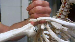 Fysioterapeutti havainnollistaa sormella kuinka jänne voi jäädä olkanivelen väliin puristuksiin.