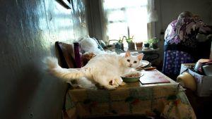 Kissa pöydällä, vanha nainen taustalla.