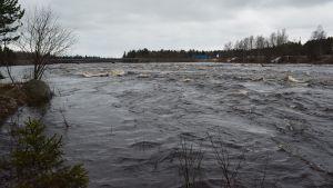 Simojoki tulvii toukokuussa 2015.