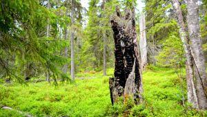 Pisavaaran luonnonpuisto