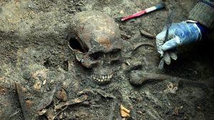 Arkeologin hansikoitu käsi puhdistaa maan sisältä paljastuvia luita ja pääkalloa.