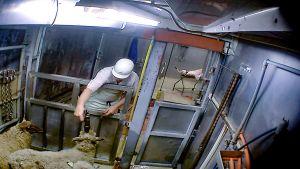 Kuvankaappaus videolta Sastamalan teurastamolta syys- tai elokuussa. Teurastaja tainnuttaa lammasta ennen varsinaista teurastamista.