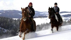 Ratsastaminen perustuu luottamukseen hevosen ja ratsastajan välillä.