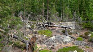 Etelä-Konneveden kansallispuistoa.