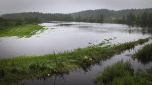 Veden valtaamaa viljelyspeltoa Perhonjoen varressa.