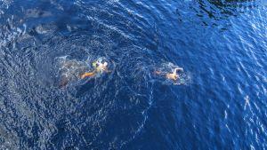 Kaksi uimaria ui Väinölänniemen uimatornista kuvattuna.