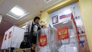 Koiraa taluttava nainen laittaa vaalilipuketta uurnaan. Takana näkyy äänestyskoppeja ja seinällä Putinin kuva.