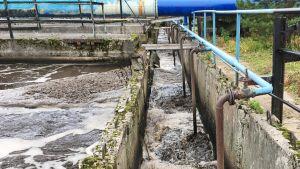 Viipurin jätevedenpuhdistamon ilmastusallas