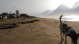 Näkymä rannalle, jossa on merivartioston asema. Kuvan etualalla on juokseva koira.