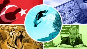 Kuvakollaasi Turkin lipusta, Pokemon Go-pelaajista, tiikeristä sekä UKIP-puolueen johtaja Nigel Faragesta. Kuvakollaasin päällimmäisenä on Gazassa parkour-temppuileva nuori mies.