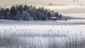 Luminen maisema jossa rantakaislikko, jäätynyt meri ja punaine rantatalo taustalla metsää.