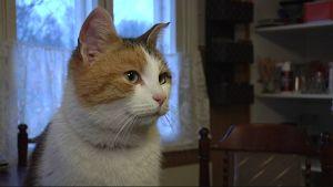 Haminasta löydettiin maanantai-iltana kissa, jonka luultiin tulleen Kajaanista saakka satama-alueelle.