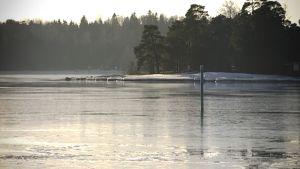 Vihreä lateraaliviitta järvenselällä.