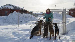 Nainen on neljän koiran kanssa ulkotarhassa.