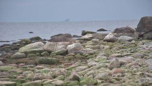 Kiviä meren rannalla.