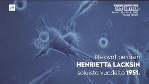 HeLa-soluja