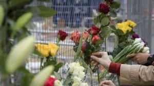 Kukkia kiinnitetään aitaan.