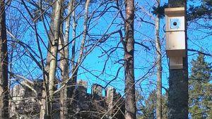 Linnunpönttö puussa, taustalla Aulangon Graniittilinna Hämeenlinnassa