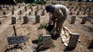 Duman hautausmaan työntekijä Abo Ezzo kastelee istutuksia 21. elokuuta 2016. Paikkaan on haudattu Abd al-Rahman al-Moudawer, joka kuoli auttaessaan kemikaalisen iskun uhreja elokuussa 2013 Damaskoksen esikaupunkialueella.