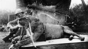 Henry Pattersson ja ensimmäinen tapettu leijona.