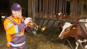 Mies soittaa trumpettia lehmille
