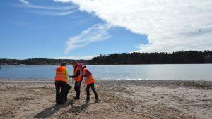 Talkoolaisia siivoamassa Ruissalon rantaa.