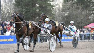 Finlandia-Ajon voittaja D.D's Hitman ja ohjastaja Ulf Ohlsson takanaan Propulsion ja ohjastaja Örjan Kihlström.
