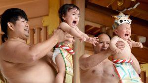 Sumopainijoita ja itkeviä vauvoja