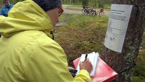 Teuvalla järjestetään tänäkin kesänä perinteinen postilaatikkopyöräily.
